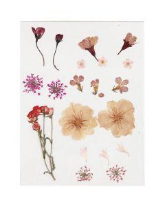Kuivatut kukat, vaaleanrosa, 1 pkk