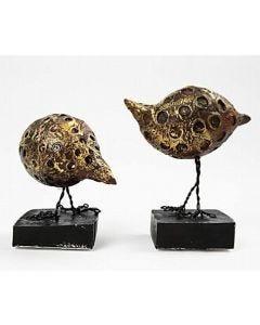 Savanni linnut