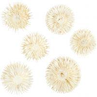 Kuivatut kukat, halk. 3-5 cm, 6 kpl/ 1 pkk