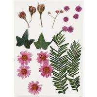 Kuivatut kukat ja lehdet, vaaleanpunainen, 19 laj/ 1 pkk